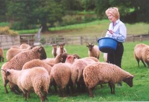 mrs-jane-kallaway-and-lambs-one