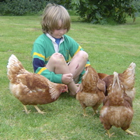 Real free range, friendly, busy, chucks