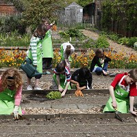 The National Trust's Sowing Squad