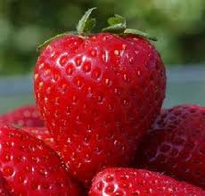 Real fresh ripe jamming strawberries